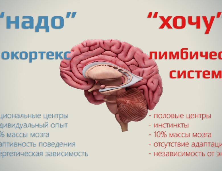 Роль неокортекса в восприятии окружающего мира и мышлении