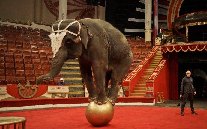 Притча про слона