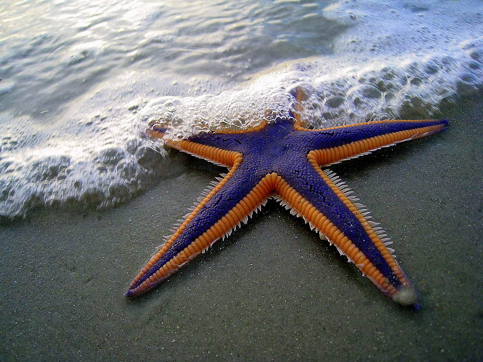 Притча о морских звёздах