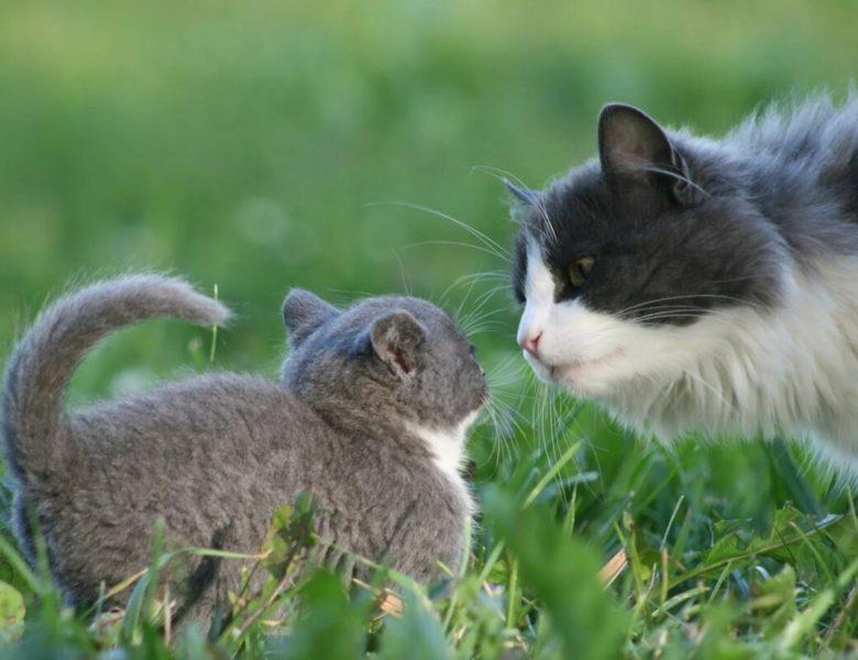 О психологии человека на примере не психологии кошки.